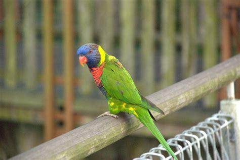 jurong bird park singapore map facts tickets hours