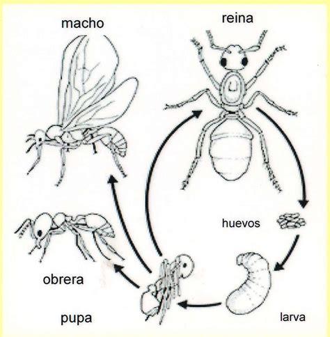 imagenes de la vida de las hormigas laboratorio actualidad del colegio