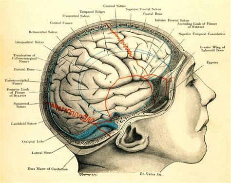 human skull diagram 102 best graphology images on language