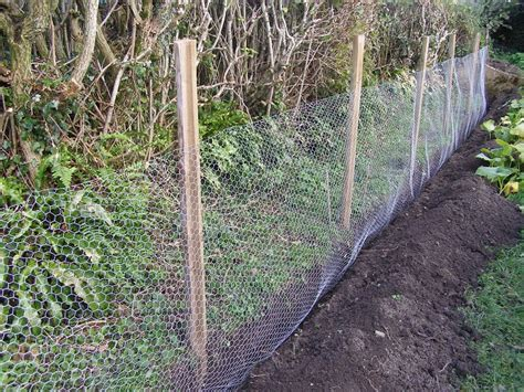 Chicken Wire Garden Fence vegetable garden fence chicken wire home decor