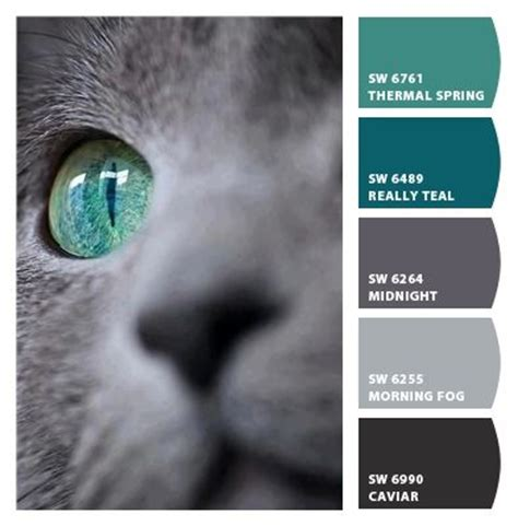 cat s eye beautiful combo to incorporate with gray it accent wall ideas