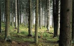 Hd woods background wallpaper download free 140257