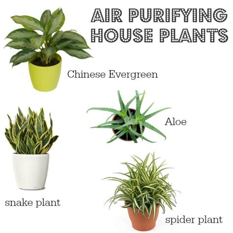 small house plant small house plants small house plants non toxic to cats