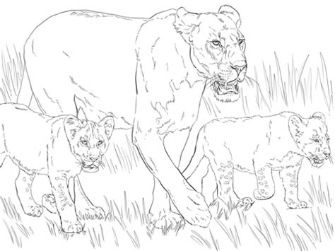 lioness with cubs coloring page supercoloring com