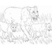 Lioness With Cubs Coloring Page  SuperColoringcom