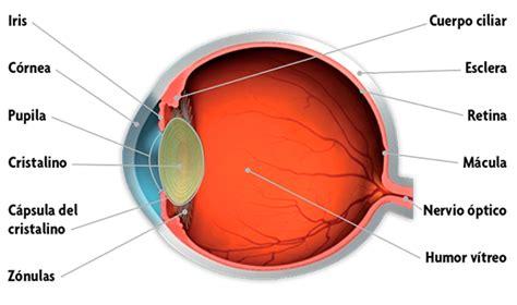 imagenes de ojos humanos y sus partes el ojo humano y sus partes