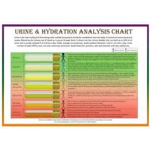 set of two urine hydration analysis and bristol stool