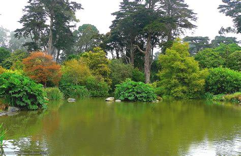 Sf Botanical Garden by Wallpaper San Francisco Botanical Garden Golden