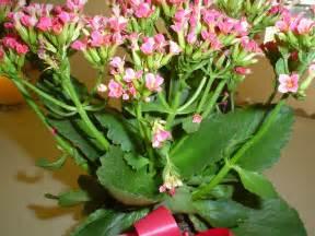 Go back gt pix for gt flowering succulent plants