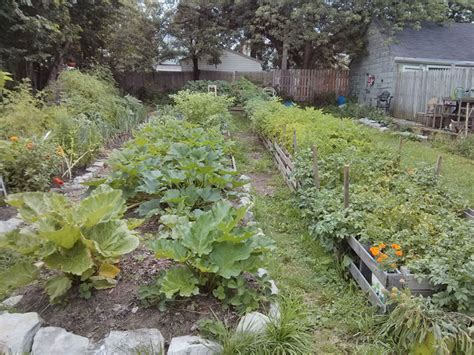 Greenwood Garden by Buffalo Ny May Your Community Gardens Grow Buffalo Rising