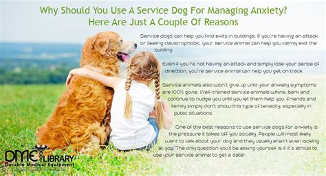 how to get an anxiety service 5 reasons to use service dogs for anxiety what can t they do
