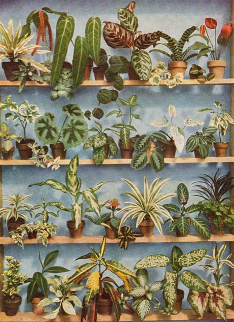 plants in house house plants on pinterest