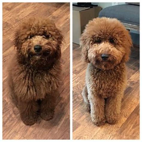 dee s grooming gallery 30 photos amp 30 reviews pet