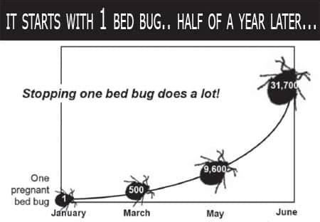bed bug removal cost bed bug cost most bed bug traps and tests can cost 50 or
