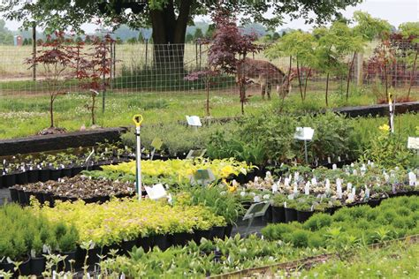 Backyard Nursery by Backyard Success Mike Mcgroarty Educates Aspiring Growers