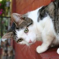 katzenhaltung in der wohnung streitfall tierhaltung vermieter kann katzenhaltung nicht