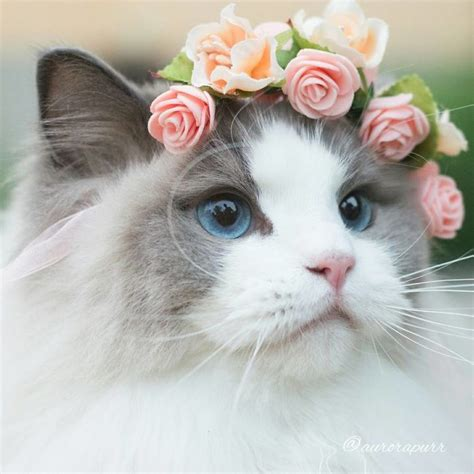 imagenes ironicas de gatos las 25 mejores ideas sobre gatos en pinterest gato