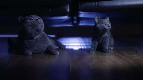 film blue russian santa claws 2014 cinema cats