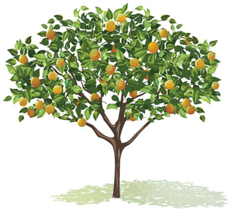 what is the fruit of the tree of grass roots nuts about fruit trees get clicking for