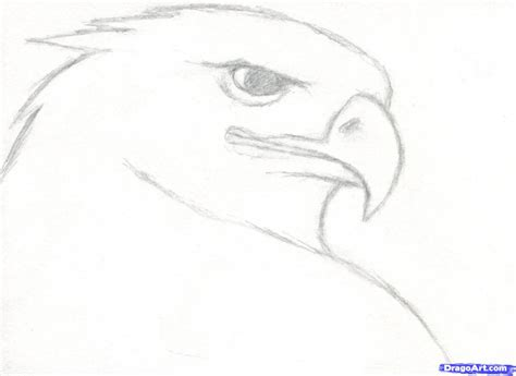 Sketches To Trace by Tag Easy Drawing Animals Pencil Drawing