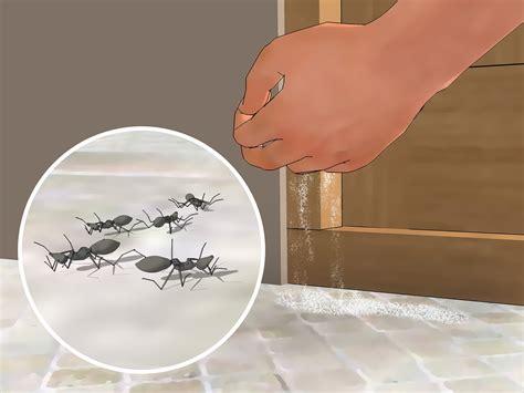 come liberarsi dalle formiche in cucina come uccidere le formiche usando il borace 3 passaggi