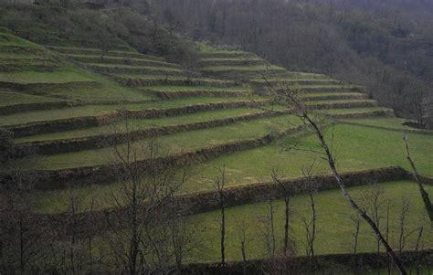 terrazzamenti liguri foto home page
