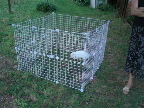 come fare gabbie per conigli come portare il coniglio al parco consigli per la
