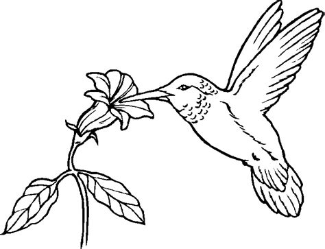 printable coloring pages for printable bird coloring pages coloring me