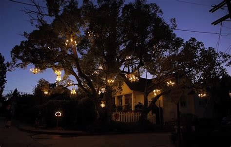 Chandeliers In Trees The Chandelier Tree Of Silver Lake Colossal