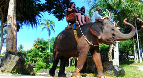 bali elephant ride tour elephant ride ubud tours visit ubud place of interest