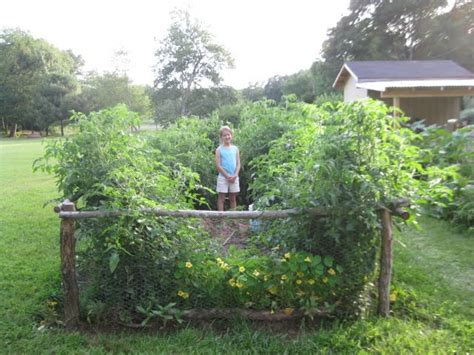 blah blah blog lasagna gardening