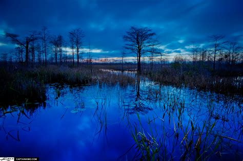 Midnight Blue Evening At Loxahatchee Slough After Sunset