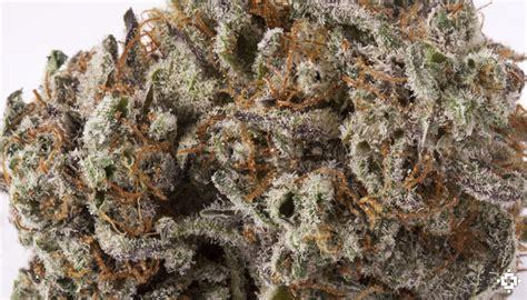 black strain black marijuana strain review