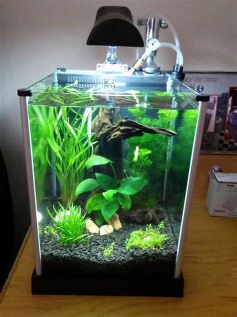 fluval spec aquascape 21 best nano tank images on pinterest aquarium