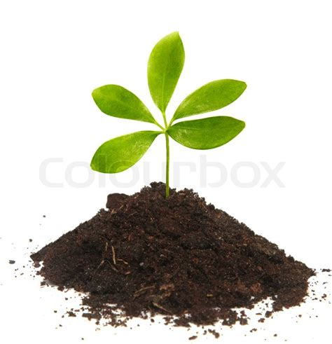 small plant small green plant with five leaves in a small group of the
