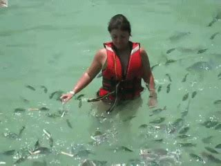 baby shark gif sharksbaby gifs find share on giphy