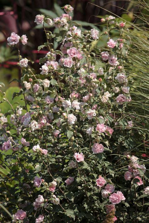 fortnam gardens bloom day september