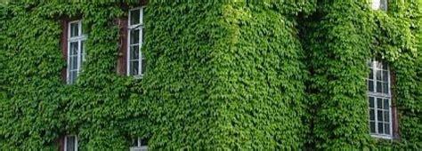 giardino verticale creare un giardino verticale edilnet