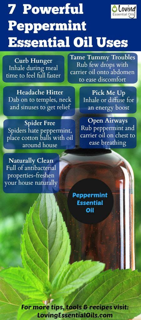 A Powerful Peppermint by 7 Powerful Peppermint Essential Uses
