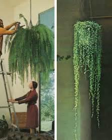 hanging plants  secret garden