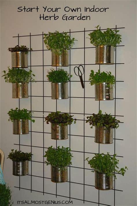indoor herbs to grow gardens herbs garden and plants on pinterest