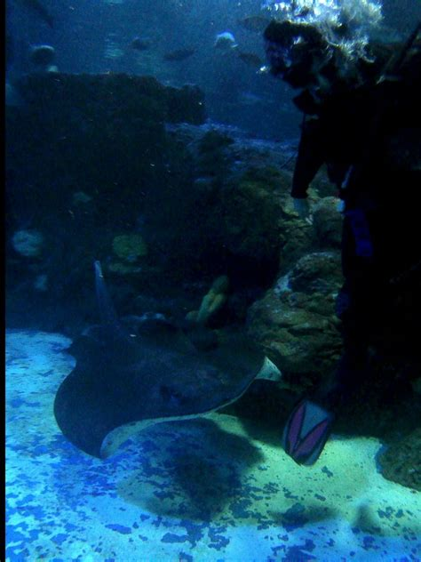 Lu Akuarium Biasa dive di seaworld ancol believe or not