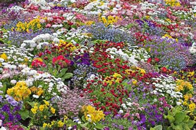 wildflower garden ideas woody wildflower garden ideas woody wildflower garden