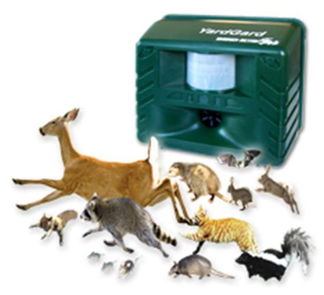 backyard animal sounds shop from your home