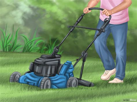 eliminare zecche dal giardino come uccidere pulci e zecche sui gatti 24 passaggi