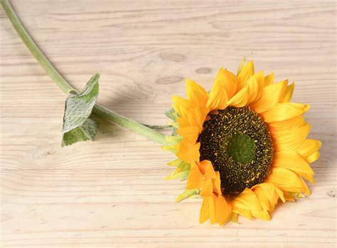 flores y floreros floreros y flores ripley