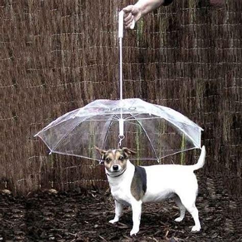 my dog can t get comfortable pet dog umbrella protective rain umbrella with leads keep