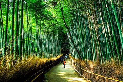 Lindsays A Lot Of In Japan by 48 Hours In Kyoto Japan The Ultimate Itinerary Of Wonders