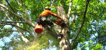 Tree Trimming Here Are The Most Important Basics For Your Tree Trimming