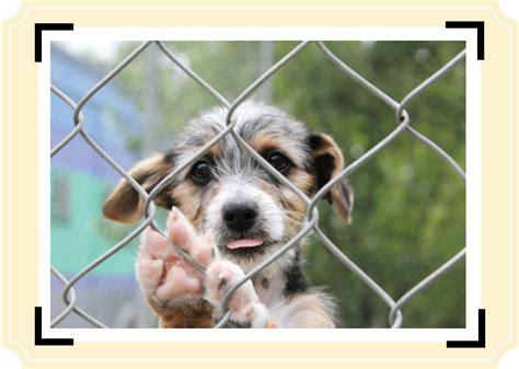 broward humane society puppies found or stray pets humane society of broward countyhumane society of broward county